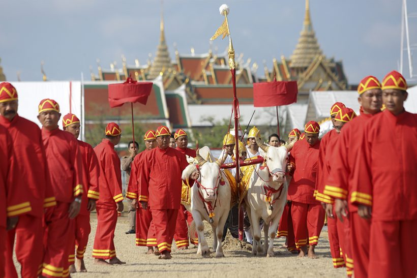 Royal Plowing Tseremoonia - Usu- Royal Ritual Bangkokis