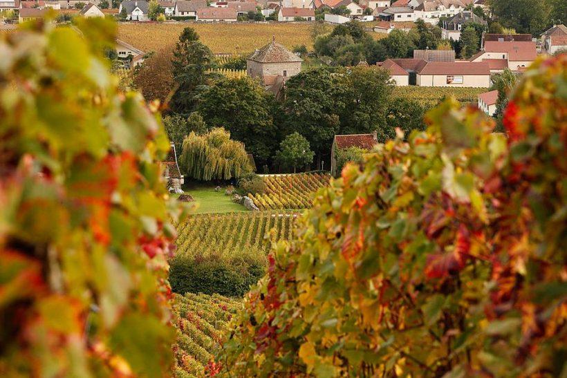 Francija septembrī: Laika, Ko Pack Ko redzēt