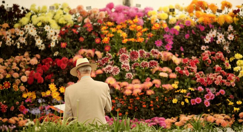 RHS Hampton Court Palace Flower Show: Что вам нужно знать