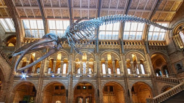 London Late Night múzeumok és galériák