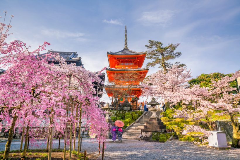 Hanami – Les faits sur les festivals de fleurs de cerisier du Japon