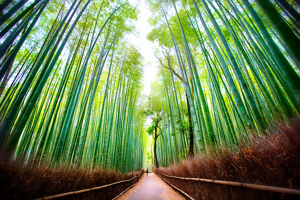 The Complete Guide to Arashiyama Bamboo Forest