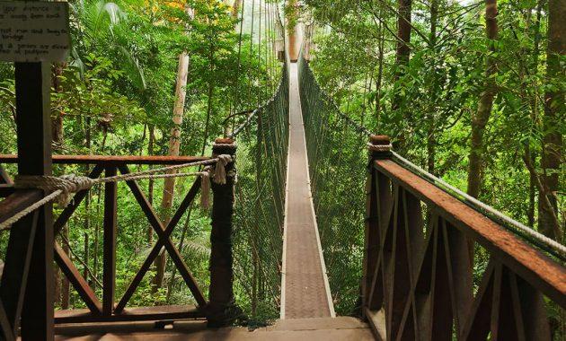 Malaysia Reiseguide Taman Negara – en av de eldste regnskoger på jorden