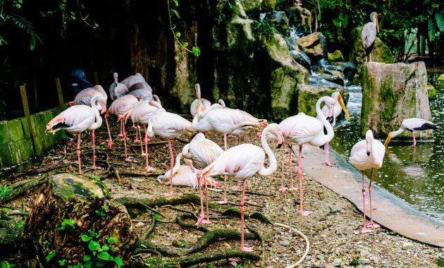 Όλα όσα πρέπει να ξέρετε για Κουάλα Λουμπούρ Bird Park